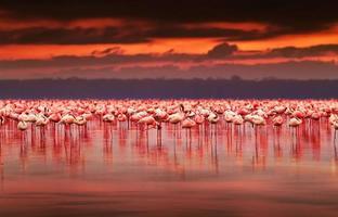 Afrikaanse flamingo's op zonsondergang foto