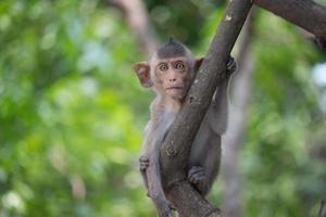 schattige apen foto