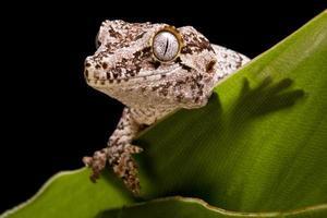 waterspuwer gekko foto