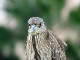 vogel met grote ogen foto