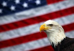 Amerikaanse zeearend en Amerikaanse vlag foto