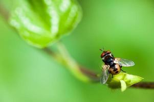 vliegend insect dat op een installatie rust foto