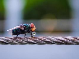 vlieg die op een draadlijn rust foto