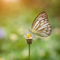 vlinder op bloem foto