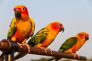 drie papegaaien foto