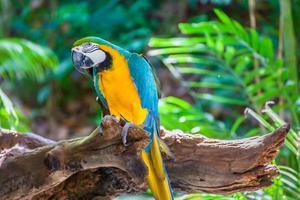 kleurrijke ara foto