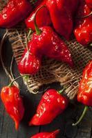 pittige hete bhut jolokia ghost peppers