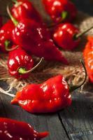 pittige hete bhut jolokia ghost peppers foto