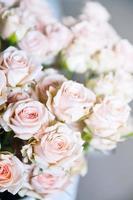 helder roze rozen achtergrond foto