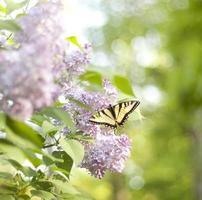 lente vlinder foto