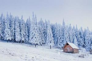 winterlandschap van besneeuwde bomen in de winter rijm en c