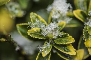 ijzige plant uit de winter natuur foto