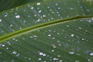 blad met kralen van water foto