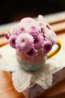 chrysant foto