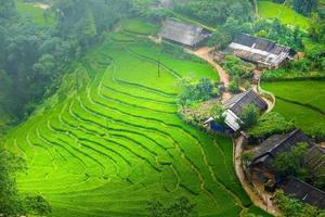 rijstvelden op terrassen in regenseizoen op sapa foto