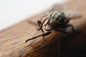 mosca ninja, yah! foto