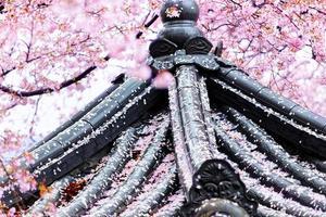 prachtige sakura bloemen en paviljoen in busan, zuid-korea foto