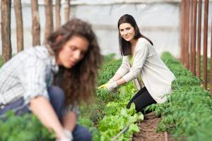 lachende groene huis vrouwelijke werknemers foto