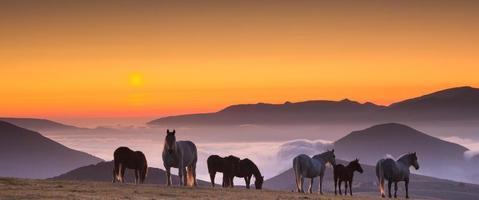 paarden bij zonsondergang foto