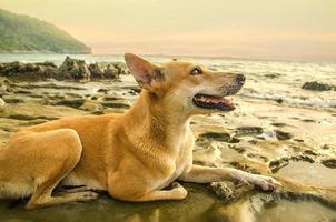 hond liggend op zeekust foto