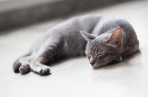 schattige kat foto