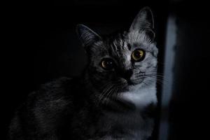 kat met zwart-wit effect foto