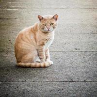 met littekens bedekte en verwaarloosde verdwaalde wilde mannelijke gemberkat op straat foto