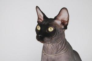 katten foto