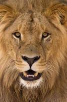 de dierlijke koning foto