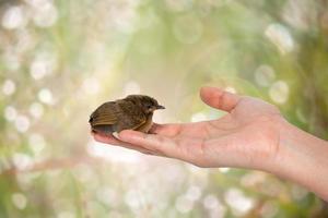 vogel bij de hand foto