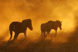 zonsondergang in Okaukeujo, Namibië foto