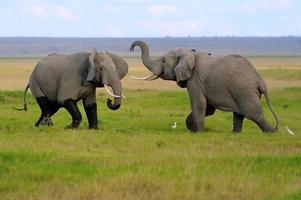 olifant foto