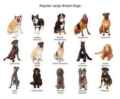 verzameling van populaire honden van grote rassen