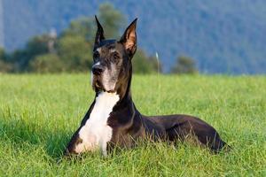 een hond die in het gras op het park wacht foto