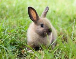 konijn in gras