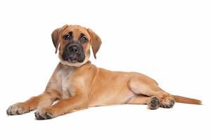 gemengd ras puppy foto