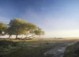 mooi diffuus licht op landschap met edelhert hert foto
