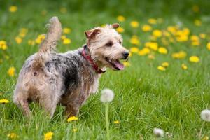 portret van een hond foto