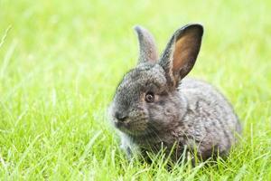 Pasen baby konijn