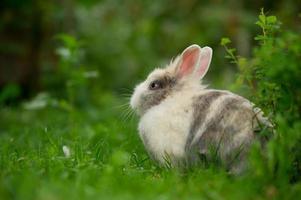 schattig pluizig konijn buitenshuis foto