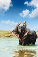 olifant opspattend water tijdens het nemen van bad in chitwan nepal