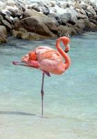 roze flamingo in rust foto