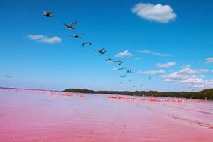 flamingo, laguna rosa, lagune roze, pelicano foto