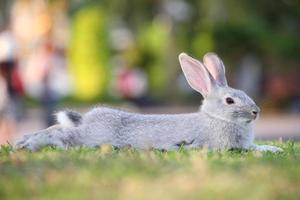konijn ontspannen op de grond. foto