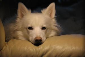 wonder hond foto