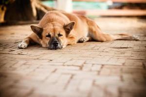dakloze eenzame straathond slapen op het voetpad foto