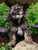 nieuwsgierig pluizig puppy foto