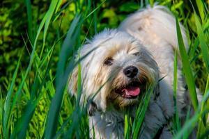 puppy in de wetlands