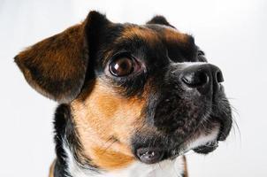 puppy op wit foto