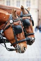 paarden foto